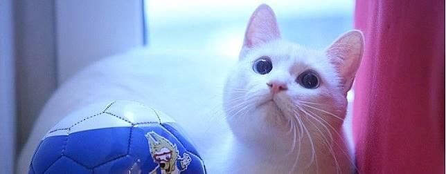 Perkenalkan Achilles, Kucing Peramal Pertandingan Piala Dunia 2018