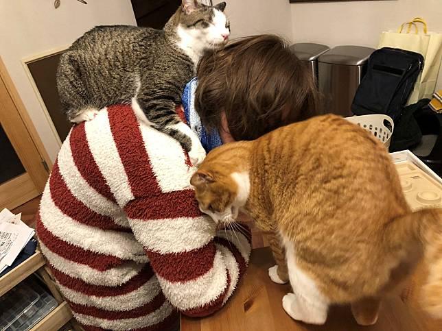 下班一開家門!竟見遠距工作妻被糾纏夾攻 貓:休想逃
