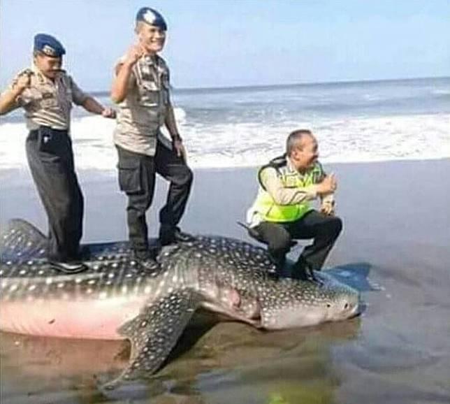 Tiga Polisi Berfoto Di Atas Bangkai Hiu 2018 Merdeka.com/Purnomo Edi