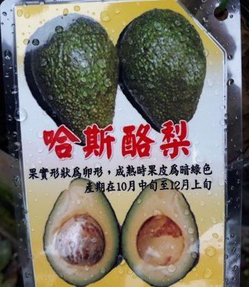 水果苗 ** 哈斯酪梨 ** 4吋盆/高30-60cm/ 酪梨的纖維含量很高【花花世界玫瑰園】R