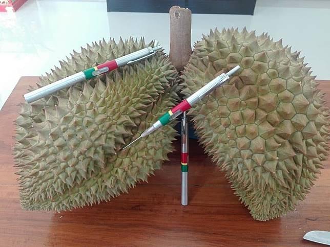 ขายแล้วล๊อตแรก ปากกาวัดความสุกทุเรียนฟันรายได้ 2.3 แสนบาท