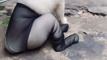 【慎入】誰給狗狗穿上了黑絲.. 看上去超糟糕了