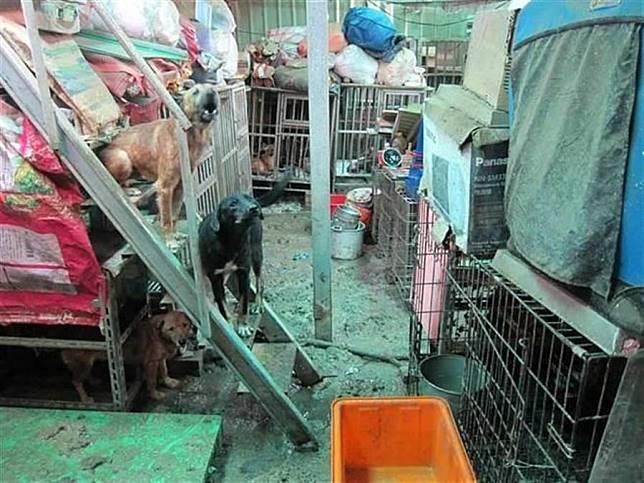 淡水狗間煉獄虐死30隻犬貓  負責人非故意獲判無罪