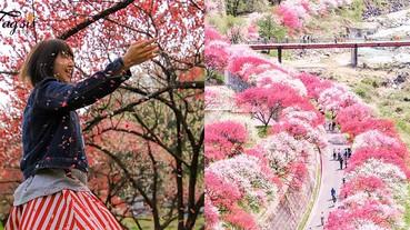 錯過櫻花還有花桃呢~#花桃の里,滿遍粉紅色,少女心都要爆發了!