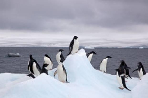 Sensus Penguin Antartika