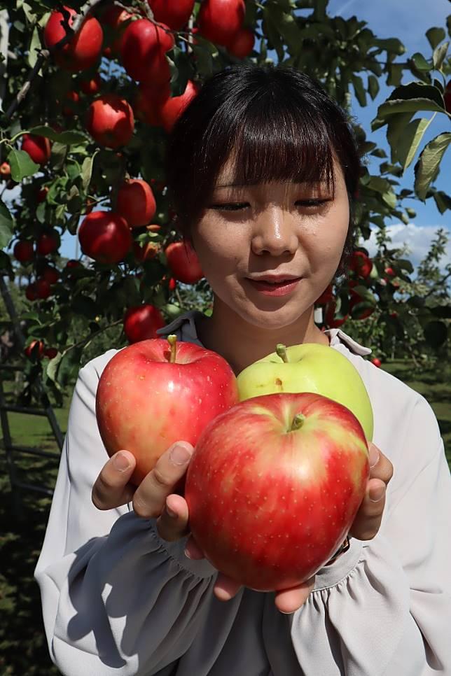 從酸到甜,園中能種出合共26個不同蘋果品種。(劉達衡攝)