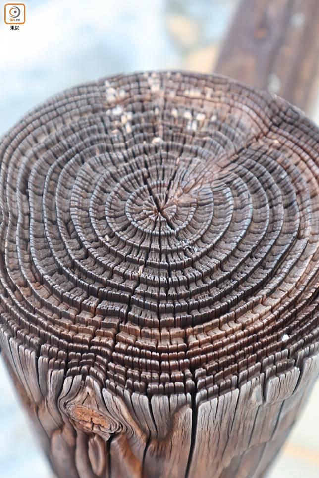 在長年高溫下,連棧道兩旁的木欄也被烘出立體的年輪來。(劉達衡攝)