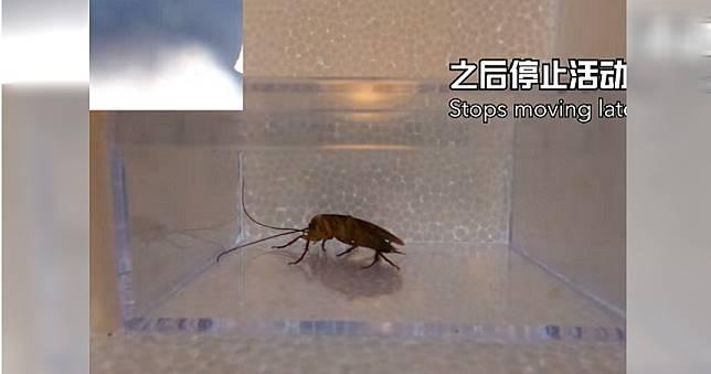 送蟑螂上太空!實驗結果令他大吃一驚