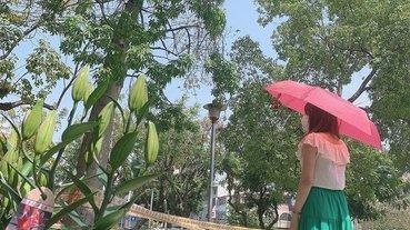「雨傘」超潑水AQUA REPEL + UV護盾 晴雨二用智慧型-亞伯尼A.Brolly TubeAuto防撞自動傘 (乾燥玫瑰) 雨傘品牌開箱推薦