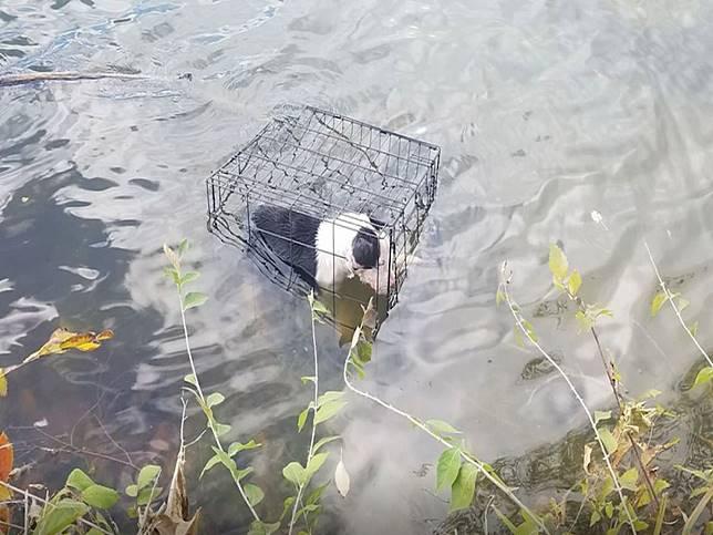男老師釣魚驚見惡意「將狗浸籠」 捨命下水拯救結局超暖心!