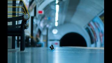 國際攝影比賽冠軍揭曉 幹架老鼠得大獎