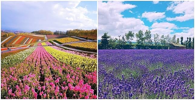 不是在作夢~比夢境還美的薰衣草田,讓人只想買機票飛北海道啊