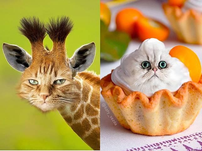P圖大神又來了!貓咪化身各種動物及食物 網笑翻:反而更可愛