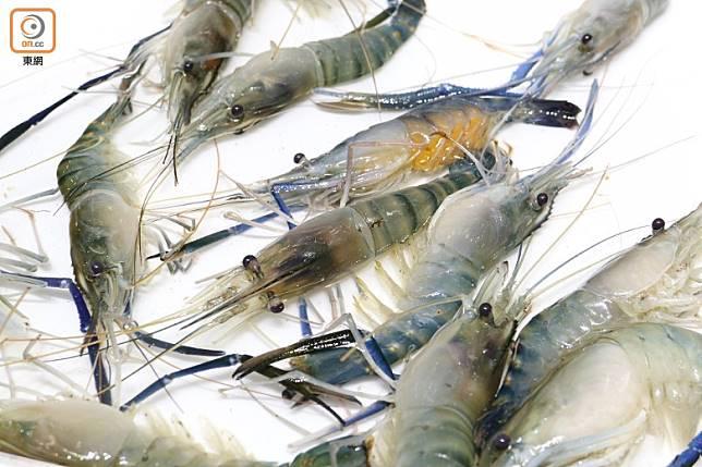 除了野生及人工養殖海蝦之外,淡水蝦也很受歡迎,好像蝦腳呈藍色的淡水長臂大蝦又叫春國蝦,特色是肉質結實彈牙,味道鮮甜蝦膏亦很甘香。(蔡浩文攝)