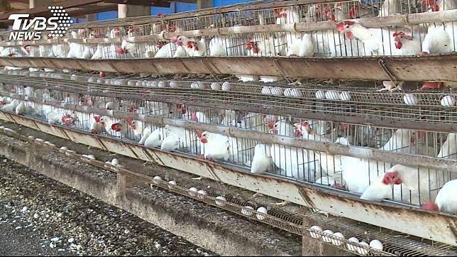 母雞下蛋是生物界的自然法則。(示意圖/TVBS)