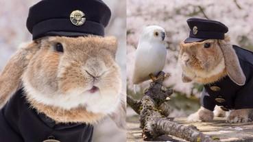 兔子成新一代日本網路「萌寵」 Cosplay 變裝超可愛!