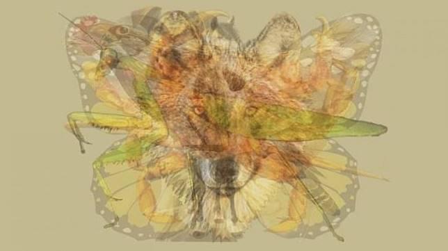 Tes kepribadian. [The Arctic Fox]
