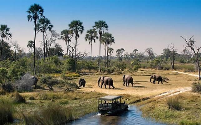 鄰近南非的波札那,首都嘉柏隆附近已有國家公園,以觀賞大象、斑馬和長頸鹿等可愛草原動物聞名。(互聯網)