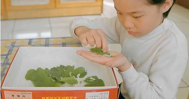 驚人發現!把蠶寶寶磨成粉 能有效治療阿茲海默症