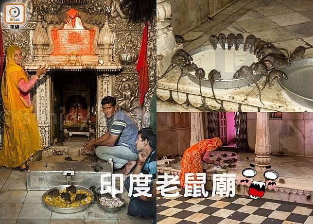 印度老鼠廟 挑戰你膽量(互聯網)