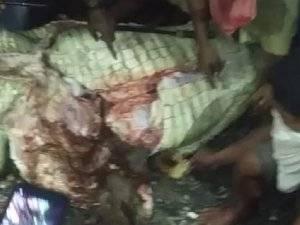 Bocah Hilang di Maluku Dimakan Buaya