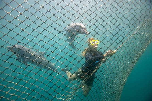 Bottlenose dolphins Rocky and Rambo are seen as Femke Den Haas cleans a net, after they were relocated at the Bali Dolphin Sanctuary rehabilitation center in Buleleng, Bali, on December 10, 2019.