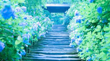 日本六月旅遊推薦!雨季必去六大自然景點,京都、鎌倉、箱根、尾瀨這樣玩才不飲恨!