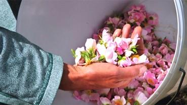 DDT毒玫瑰花瓣流向化妝品!?不怕,分辨玫瑰花水安全與真偽有絕招!
