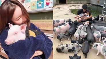 來去探望同伴囉!韓國超療癒「小豬博物館」,被十幾隻大豬小豬包圍居然有種安心感?!
