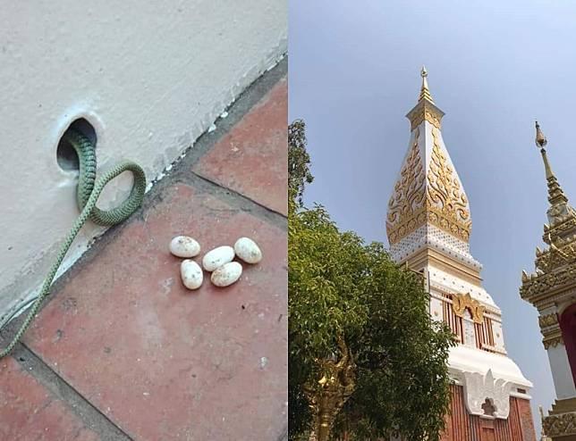 ผลการค้นหารูปภาพสำหรับ งูเขียววางไข่ ในลานพระธาตุ