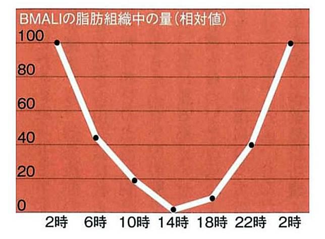 日本大學醫學系棒葉繁紀副教授研究發現,BMAL1分泌的最低點為下午2點,高峰期在凌晨2點,最高與最低點的濃度相差高達20倍。(互聯網)