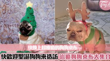 超治癒狗狗桌布又來啦~桌面狗狗也要跟著一起過聖誕節