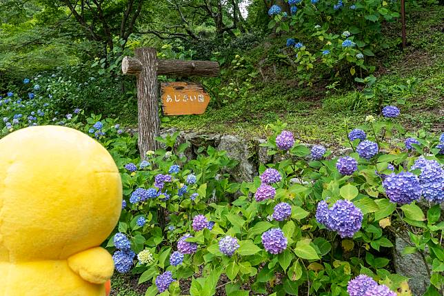 走約7-8分鐘就到繡球花園。