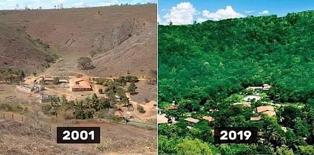 Kawasan hutan di Brasil yang dulunya mati, kini kembali hijau