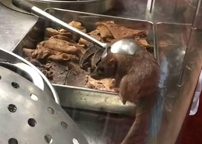 有老鼠在銅鑼灣謝斐道一間粉麵檔偷食牛雜。(讀者提供)