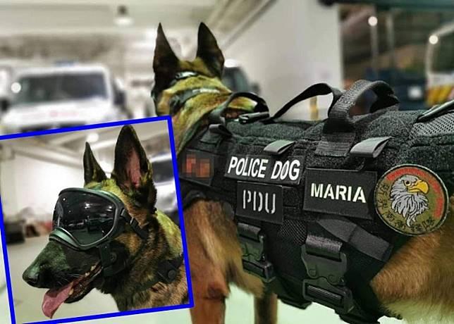警犬除配備護目鏡,最近亦新添「戰術背心」。(受訪者提供)