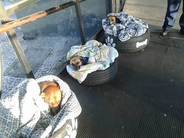 巴西公車總站利用舊輪胎與毛毯 為浪狗製作暖床好過冬