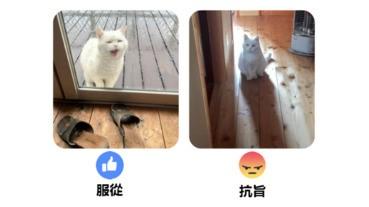 【有片架】貓星人下雨也要外出:服從/抗旨?!