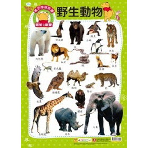 維尼學習掛圖-野生動物