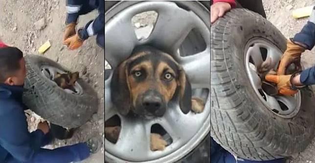 Sebuah video viral menunjukkan beberapa orang petugas pemadam kebakaran dan dinas penyelamatan hewan sedang berusaha menyelamatkan kepala anjing yang tersangkut di celah velg mobil bekas