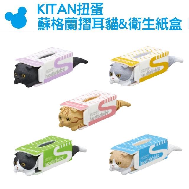 【KITAN扭蛋 蘇格蘭摺耳貓&衛生紙盒 P2】Norns 轉蛋 公仔 玩具 裝飾 面紙盒 療癒小物 擺飾 貓奴 貓咪