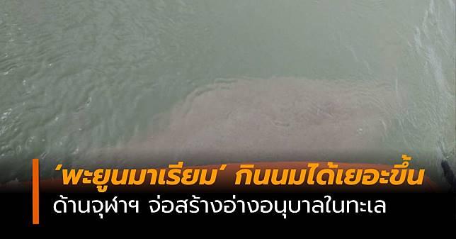 จุฬาฯ จ่อสร้างอ่างอนุบาลในทะเล หวังป้องกันการเกยตื้นในช่วงมรสุม