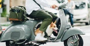 婴儿没戴安全帽挨罚!踏板载小孩、狗狗可以吗?