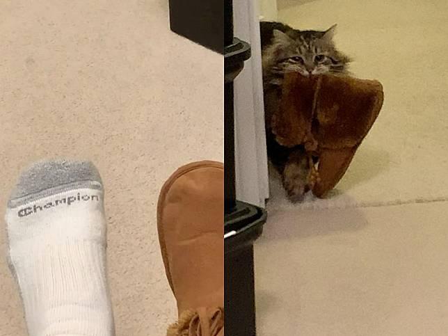 貓咪每早乖等女子醒來 來回噠噠噠咬毛毛拖鞋給她:要穿暖暖唷~