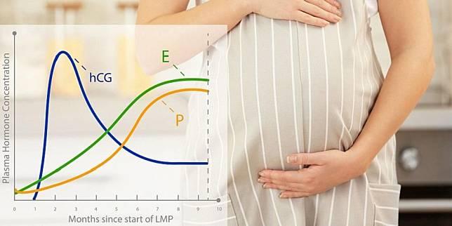 Pengaruh Kadar Hormon hCG alias Hormon Kehamilan untuk Bumil
