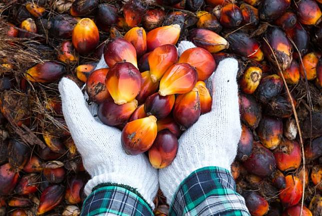 Indonesia's palm oil exports declined by 35.6 percent in January to 2.39 million tons, according to data provided by the Indonesian Palm Oil Producers Association (GAPKI)