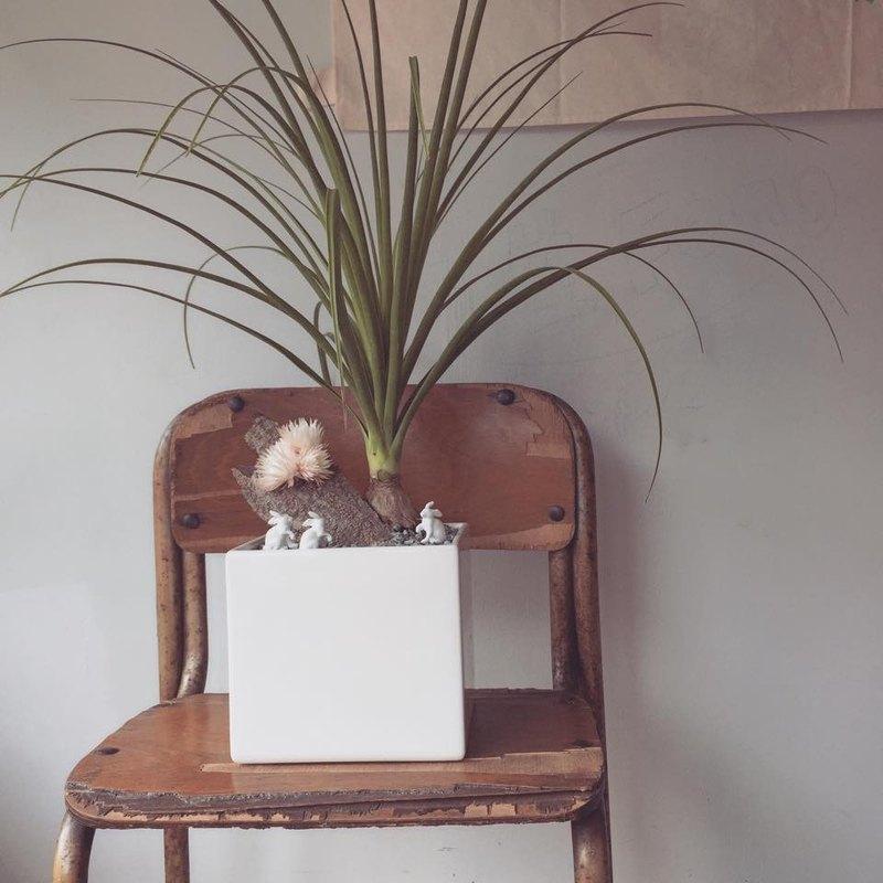 屬於室內植栽 開幕送禮盆栽 旺旺發財樹 金錢樹 搭配小動物的送禮設計
