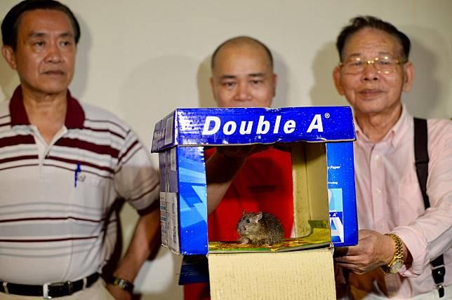 誘捕紙箱成功捉到老鼠。