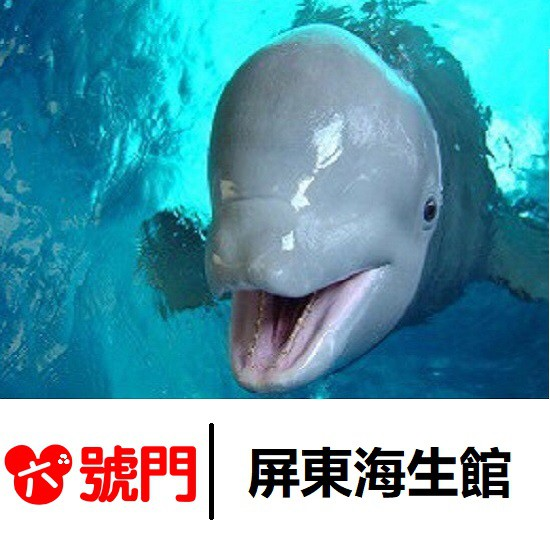 【免運】【蝦幣回饋】 國立海洋生物博物館 屏東海生館