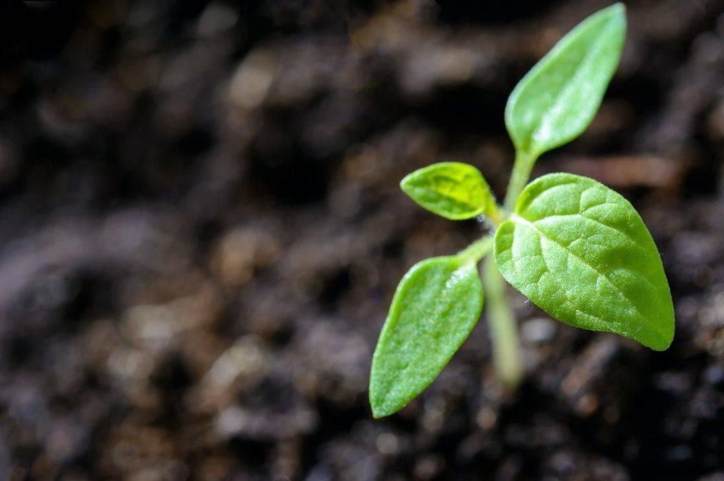 Perkembangan Vegetatif Pada Tumbuhan Vegetatif Alami Dan Vegetatif Buatan Beserta Contohnya Bobo Id Line Today
